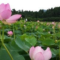 Photo taken at 古代大賀蓮の里 by genuine_tatsu on 6/23/2013