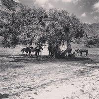 Photo taken at Dunas de Tunquén by Felipe U. on 1/5/2013