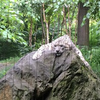 8/3/2014 tarihinde MSCziyaretçi tarafından Central Park Zoo - Snow Leopard'de çekilen fotoğraf