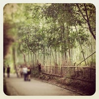 Photo taken at Arashiyama Bamboo Grove by まやたそ on 11/4/2012
