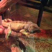 2/6/2013 tarihinde Jamilah M.ziyaretçi tarafından Winking Lizard Tavern'de çekilen fotoğraf