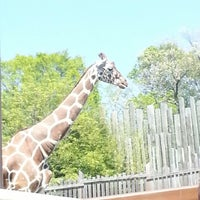 Photo taken at Maryland Zoo in Baltimore by dee on 4/27/2013