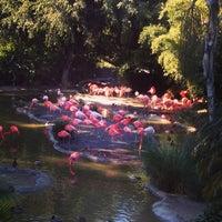Photo taken at Flamingo Exhibit by Elise M. on 1/12/2013