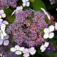 Das Foto wurde bei Planten un Blomen von Olga M. am 7/15/2013 aufgenommen