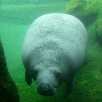 Photo taken at Tampa's Lowry Park Zoo by Christina M. on 10/24/2012