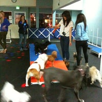 Zoom Room Dog Training - Sherman Oaks - Sherman Oaks, CA