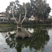 Das Foto wurde bei Page Museum at the La Brea Tar Pits von todd s. am 12/6/2012 aufgenommen