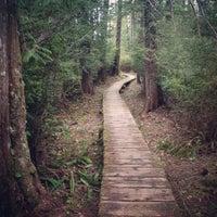 ozette loop trail 2 tips