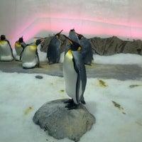 Photo taken at SEA LIFE Melbourne Aquarium by Pundie Z. on 1/11/2013