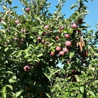 Photo taken at Mack's Apples by Tom M. on 9/29/2013