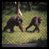 Photo taken at Monkey World - Ape Rescue Centre by Sahand on 6/5/2013