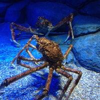 Photo taken at S.E.A. Aquarium by Kampol P. on 7/26/2013