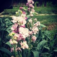 7/20/2013にEric Z.がBellevue Garden Plotsで撮った写真