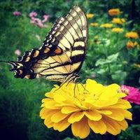 8/5/2013にEric Z.がBellevue Garden Plotsで撮った写真