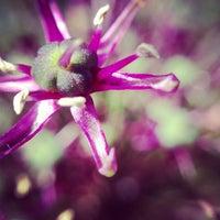 Photo taken at Olbrich Botanical Gardens by David G. on 6/16/2013