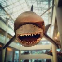 Снимок сделан в San Diego Natural History Museum пользователем Tom B. 11/30/2012