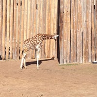Photo taken at Tulsa Zoo by Reva M. on 2/17/2013
