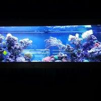 Photo taken at ABC Aquarium by Dave P. on 1/6/2013