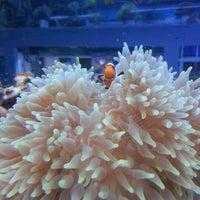 Photo taken at ABC Aquarium by Dave P. on 11/18/2012
