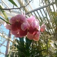 Photo taken at Brooklyn Botanic Garden by lycheemamba on 2/23/2014