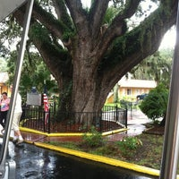 Photo taken at The Old Senator Tree by Summer S. on 9/14/2012