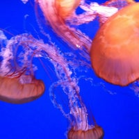 Photo taken at SEA LIFE Minnesota Aquarium by Liz W. on 12/30/2012