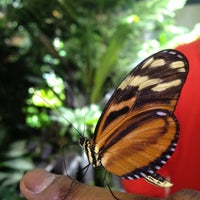 Photo taken at The Butterfly Conservatory at the American Museum of Natural History by Sami R. on 12/28/2012