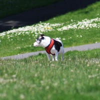 Photo taken at Alta Plaza Park by Russell D. on 6/30/2013