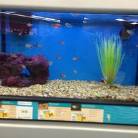 Photo taken at Petco by Quenepita67 S. on 6/23/2013