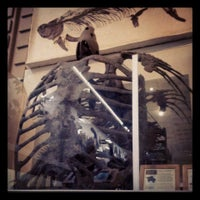 Photo taken at Peabody Museum of Natural History by Rachael Q. on 8/17/2013