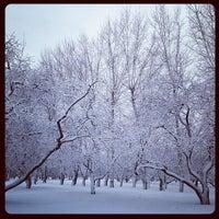 Снимок сделан в Яблоневый сад пользователем Александр Ф. 3/1/2013