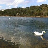 3/10/2013 tarihinde Volkan A.ziyaretçi tarafından Gölet'de çekilen fotoğraf
