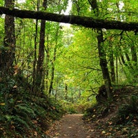 Foto tomada en Forest Park - Wildwood Trail por Aaron L. el 10/14/2012