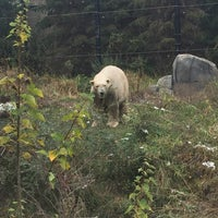Photo taken at Polar Bear Odyssey At Como Park by Teresa R. on 10/29/2017