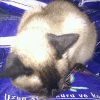 Das Foto wurde bei Alice Pet Shop von FBrbrs19🌿7 am 11/6/2012 aufgenommen