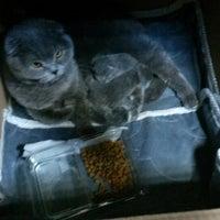 Das Foto wurde bei Alice Pet Shop von FBrbrs19🌿7 am 3/22/2014 aufgenommen
