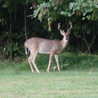 Photo taken at Diamond Ridge Golf Course by Jill F. on 9/5/2015
