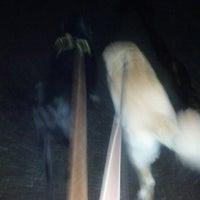 Photo taken at dog Walk by Nate P. on 12/5/2012