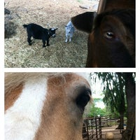 Photo taken at Therapeutic Horsemanship Of Hawaii by Lindsey F. on 7/28/2013