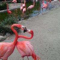 Photo taken at Flamingo Exhibit by Alexandria S. on 3/20/2013