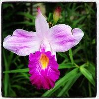 Das Foto wurde bei National Orchid Garden von Ariel M. am 12/9/2012 aufgenommen