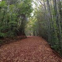 11/24/2012 tarihinde Onur K.ziyaretçi tarafından Polonezköy Tabiat Parkı'de çekilen fotoğraf