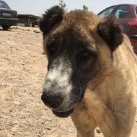 Photo taken at Vafa Animal Shelter   پناهگاه حیوانات وفا by omid n. on 7/14/2017