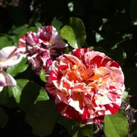 Photo taken at San Antonio Botanical Garden by Christine W. on 4/20/2013