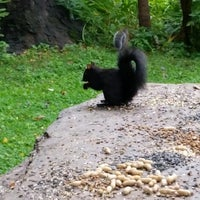 Photo taken at Squirrel Park by Nancy S. on 8/13/2014