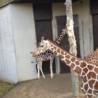 Photo taken at Allwetterzoo Münster by Elk O. on 11/25/2012