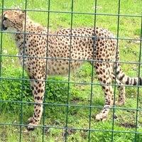 Das Foto wurde bei Tierpark EuregioZoo von Jon P. am 5/19/2013 aufgenommen