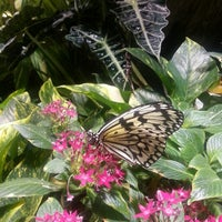 Photo taken at The Butterfly Conservatory at the American Museum of Natural History by Cristhal M. on 5/18/2013