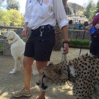 6/3/2013 tarihinde Ramon A.ziyaretçi tarafından Cheetah Run'de çekilen fotoğraf