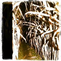 Photo taken at Shuckle's Corn Maze by Cindy C. on 10/13/2013